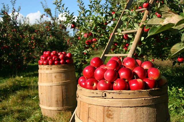 Espectroscopia en la clasificación de manzanas para control de calidad